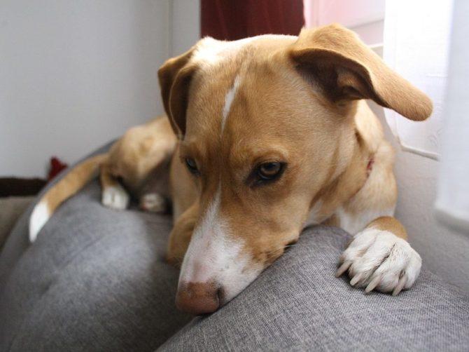Как вывести пятна с дивана после собаки